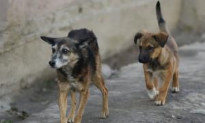 «Собаки набросились на мою маму». Смоляне запасаются шокерами