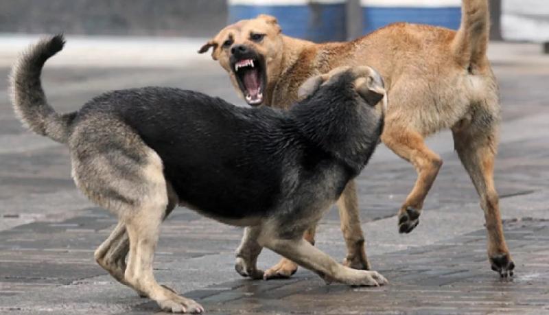 Смоляне вынуждены прятаться от бродячих собак на детских горках