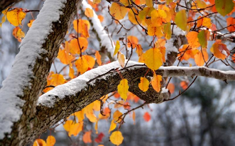Синоптики рассказали, когда на Смоленщину вернется настоящая осень