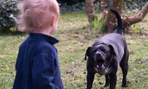 В Смоленске собака покусала ребенка