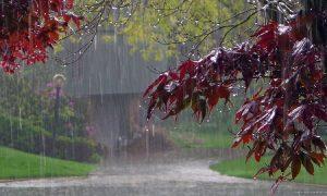 В Смоленске продолжатся дожди