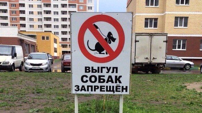 Карантин по бешенству введут в Смоленске