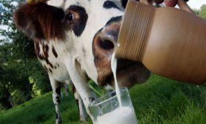 Смолян кормили продуктами из молока непонятного происхождения?