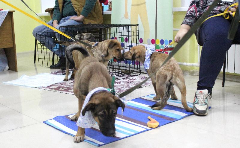 Смоляне дарят дом бездомным животным