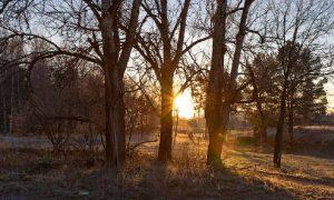 В Смоленской области станет чуть теплее