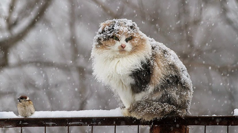 Смолян ждут мокрый снег и гололед