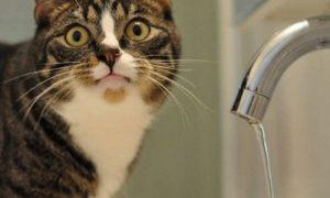 В Смоленске жильцам 8 домов отключат воду