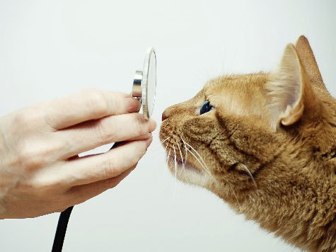 Заболел питомец? Ветеринарная клиника Айболит спешит на помощь!