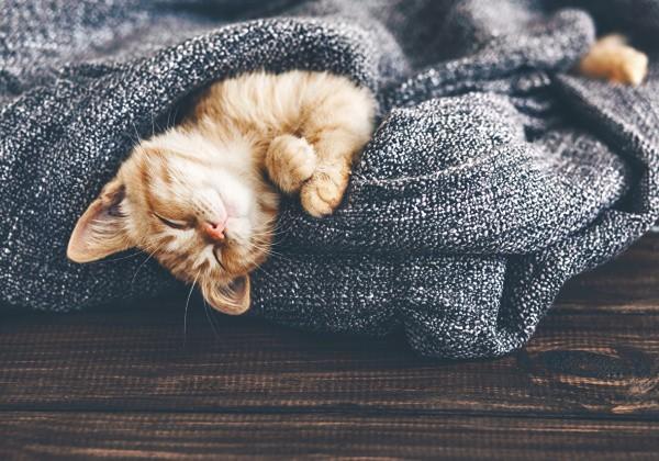 Сколько нужно спать, чтобы жить долго