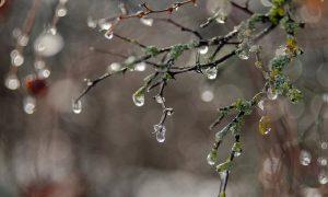 В Смоленской области продолжается оттепель