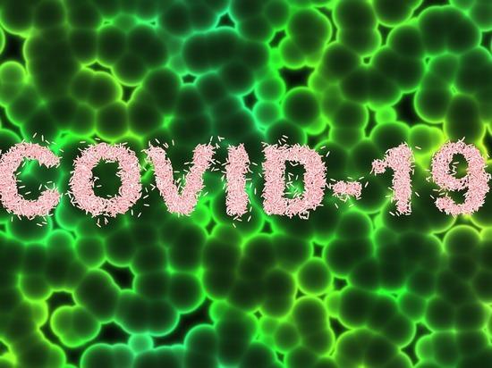 Власти Смоленской области рассказали о результатах проведённых исследований на коронавирус