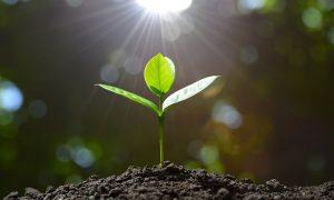 Важность длительности солнечного дня для садовых растений