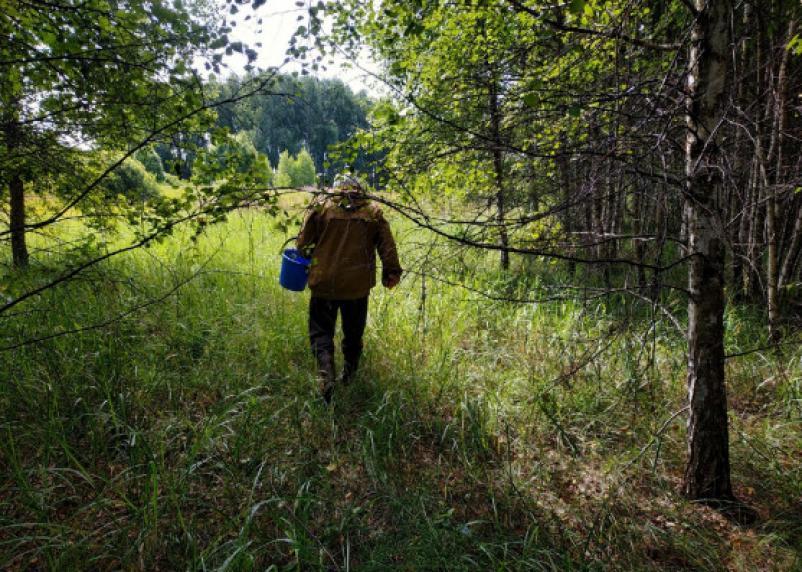 В Смоленской области клещи покусали 83 смолян