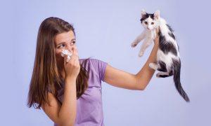 Аллергия на шерсть животных. Как жить с любимым питомцем?