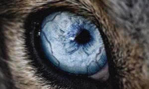 Как следить за собачьими глазками