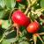 Немецкие эксперты назвали продукты, наиболее богатые витамином С