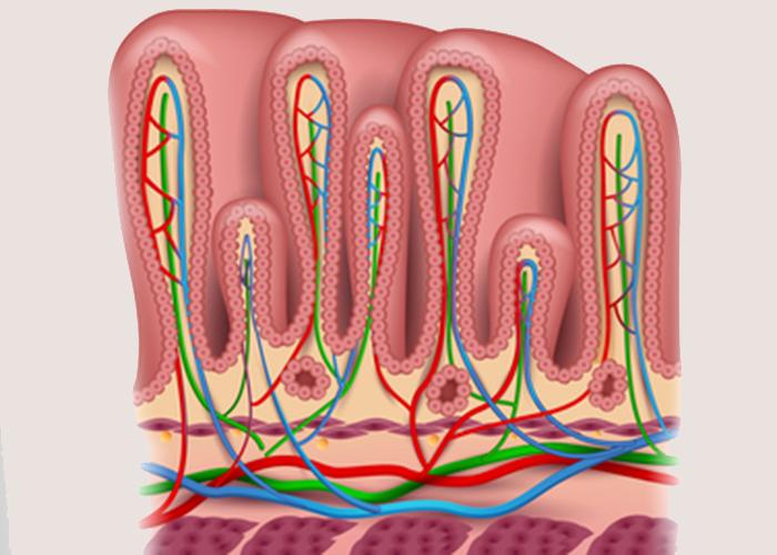 Cиндром повышенной проницаемости слизистой