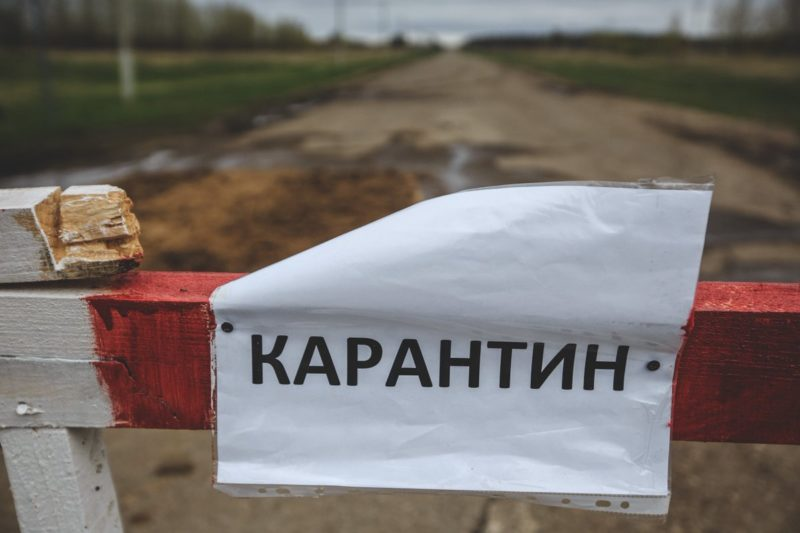 В деревне Смоленской области продлили карантин из-за опасного заболевания овец