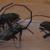 12 районов Смоленской области ушли на карантин из-за лесных жуков-вредителей