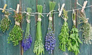 Здоровье от природы: 9 сильнодействующих трав