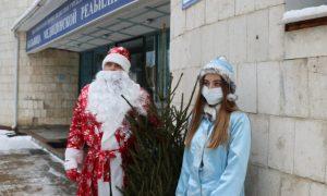 Смоленские единороссы подарили живые ели ковидным госпиталям
