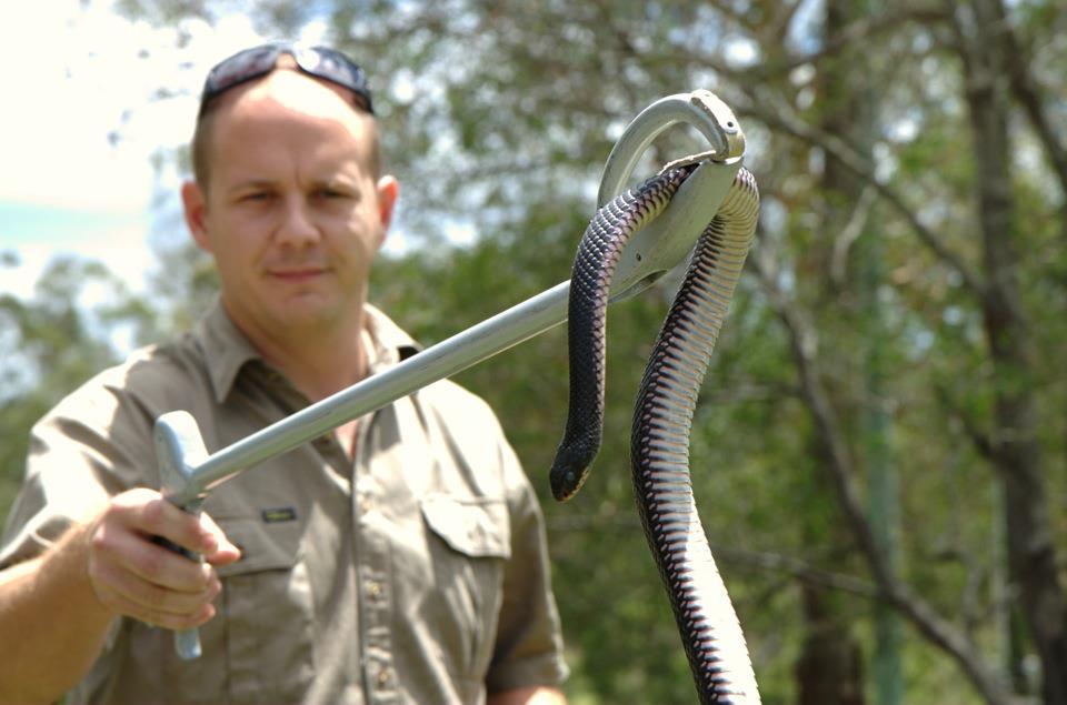 Эффективная борьба со змеями