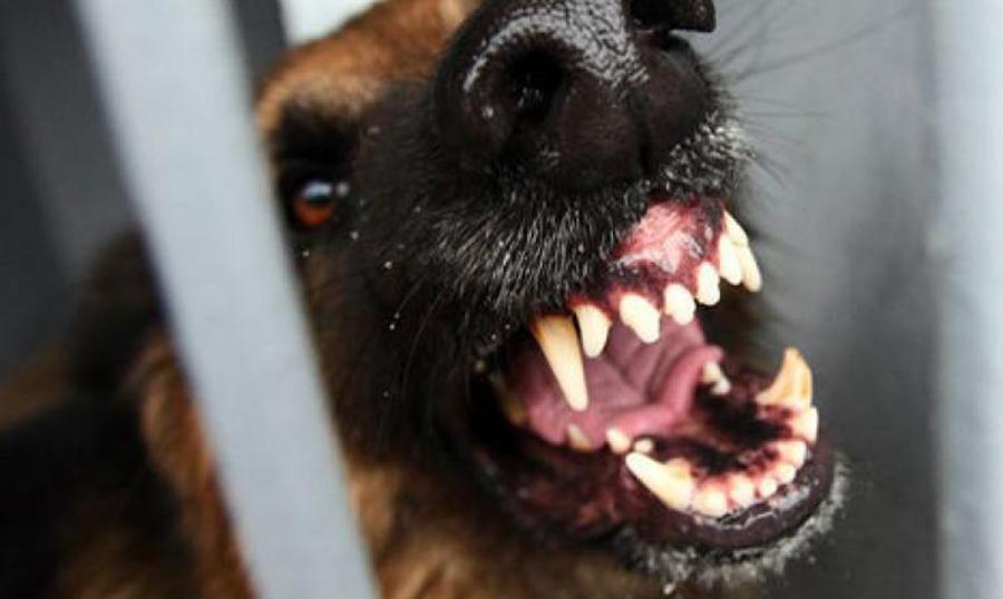 В Смоленской области выявили 7 случаев бешенства животных