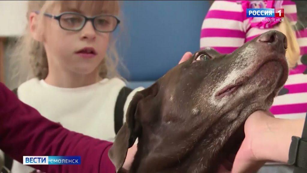 Собаки, которые лечат. Смоляне помогают детям благодаря канистерапии