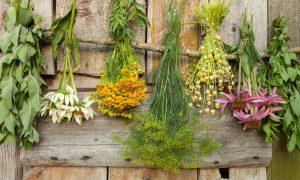 Какие лекарственные растения можно посадить на дачном участке