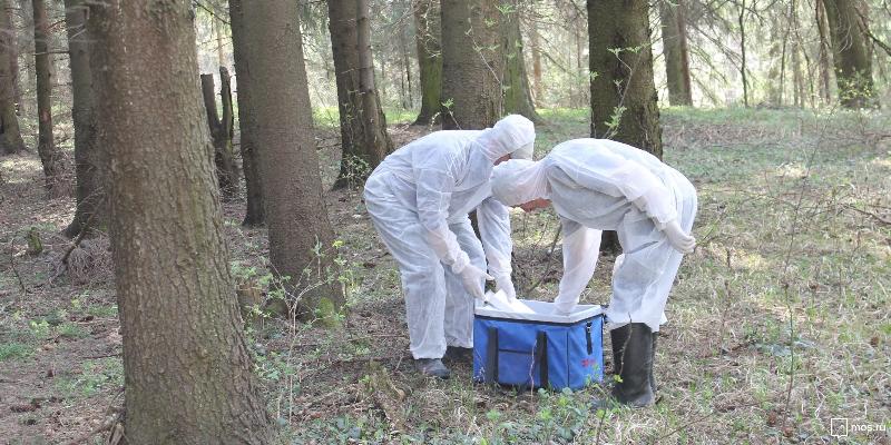 В Смоленской области выявлено 16 случаев бешенства