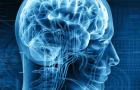 Какая простая привычка поможет сохранить здоровье мозга