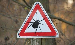 В Смоленской области с начала года от укусов клещей пострадали более 940 человек
