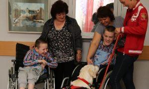 «Исцеляющая встреча». Как смоленские собаки помогают детям с инвалидностью